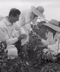 Mezőgazdaság - Délalföldi Mezőgazdasági Kísérleti Intézet