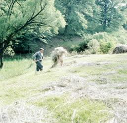 Mezőgazdaság - Szénát gyüjtő falusi ember Hollókőn