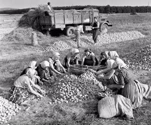 Mezőgazdaság - A MÉK dejtári begyűjtőhelye