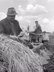 Mezőgazdaság - Mezőgazdasági munka - Betakarítás