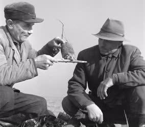 Mezőgazdaság - Hörcsögvadászat a hernádnémeti határban