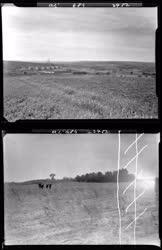Természet - Mezőgazdaság - Tiszapalkonya