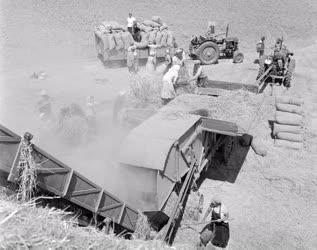 Mezőgazdaság - Cséplés a Szepetneki Dózsa Termelőszövetkezetben