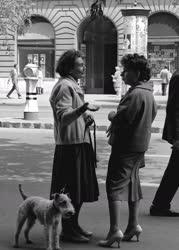 A szerző válogatása - Budapesti pillanatkép
