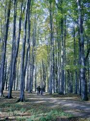 Természet - Erdei séta a Bükkben