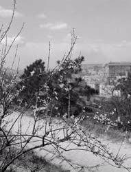 Városkép - Gellért-hegy - Tavasz