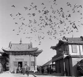 Életkép - Mongólia - Ulánbátor