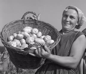 Mezőgazdaság - Őszi burgonyaszedés Tolna megyében