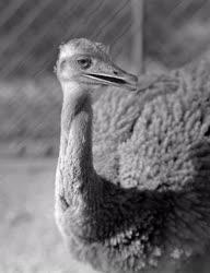 Állatvilág - Budapesti Állatkert - Nandufióka