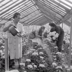 Mezőgazdaság - Kertészet - Szegedi Kertészeti Vállalat