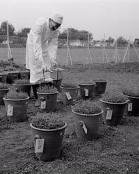 Mezőgazdaság - Szarvasi Öntözési és Rizstermesztési Kutató Intézet