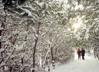 Természet - Tél a Lővérekben