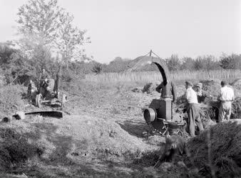 Mezőgazdaság - Silóznak a téesztagok