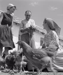 Mezőgazdaság - A túrkevei Vörös Csillag Tsz