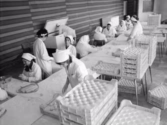 Ipar - Fagyasztott szilvásgombóc gyártás