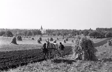 Mezőgazdaság - Betakarítási és vetési verseny Ecseren