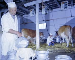 Mezőgazdaság - Állattartás - Visontai Reménység Mgtsz tehenészete