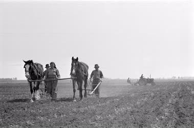 Mezőgazdaság - Kapálják a kukoricát