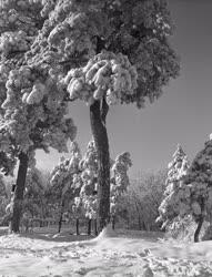 Időjárás - Tél a Mecsekben