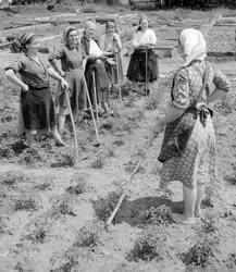 Mezőgazdaság - A rákoskeresztúri Kossuth Termelőszövetkezet