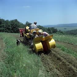 Mezőgazdaság - Erdőgazdálkodás - Géppel palántálják a fenyőfát