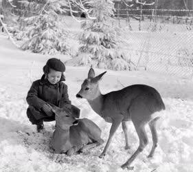 Életkép - Természet - Kisgyermek őzekkel Galyatetőn