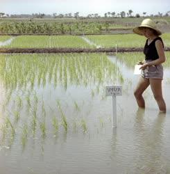 Mezőgazdaság - Szarvasi Halászati és Öntözési Kutatóintézet