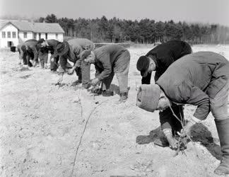 Mezőgazdaság - Szőlőtelepítés