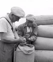 Mezőgazdaság - Cséplés a vértesacsai Vörös Október TSZ-ben