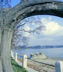 Természet - A tatai tó