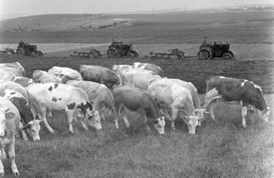 Mezőgazdaság - A nemesvámosi Petőfi Tsz