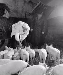 Mezőgazdaság - Úttörő Termelőszövetkezet