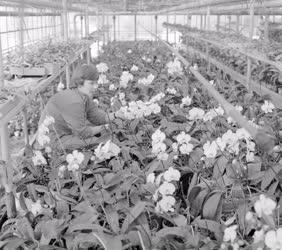 Mezőgazdaság - Virágzik az orchidea