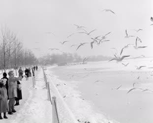 Szabadidő - Befagyott a Balaton