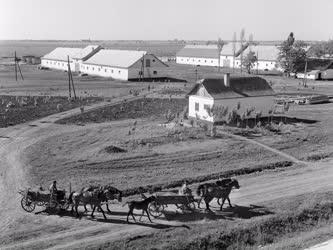 Mezőgazdaság - A nádudvari Vörös Csillag Tsz tanyája