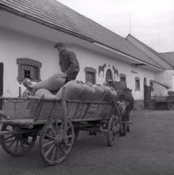 Mezőgazdaság - Mosonszentjánosi Haladás Termelőszövetkezet