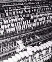 Textilipar - A Kaposvári Textilművek