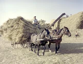 Mezőgazdaság - Cséplés a szepetneki Dózsa Tsz-ben