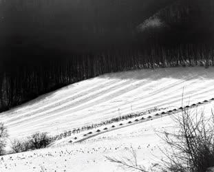 Természet - Tél a Pilisben
