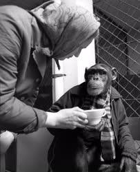 Állatkert - Böbe visszatért Guineából