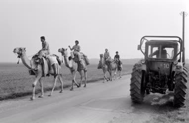 Idegenforgalom - Líbiai turisták teveháton