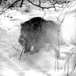 A szerző válogatása - Téli vadászkaland