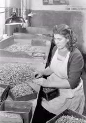 Ipar - Munkásnő a Facsavargyárban