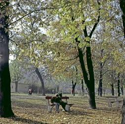 Életkép - Parkban olvasó fiúk