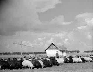 Mezőgazdaság - Hortobágyi képek