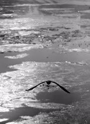 Időjárás - Sirály a Dunán