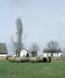 Mezőgazdaság - Állattenyésztés - Rackanyáj