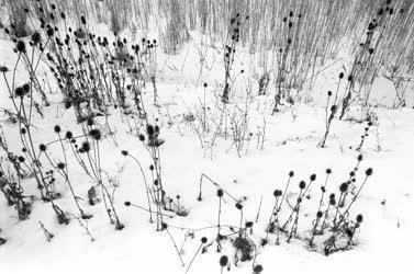 Hortobágy - Téli képek