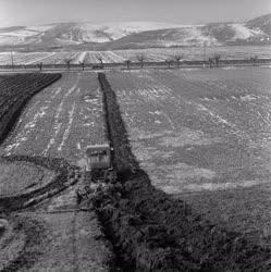 Mezőgazdaság - Petőfi Termelőszövetkezet