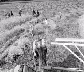Mezőgazdaság - Aratás Zala megyében